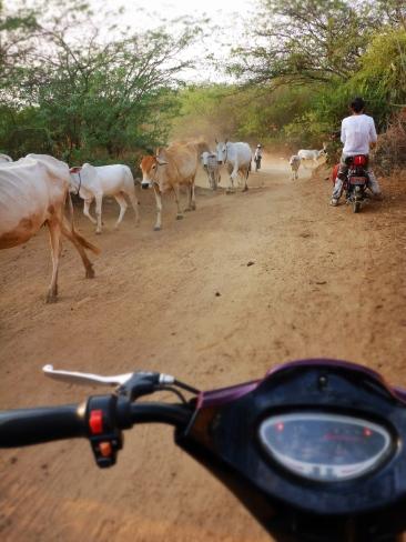 Lost in Bagan