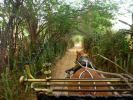 Horse & Buggy - Bagan