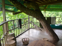 Inside the Treehouse
