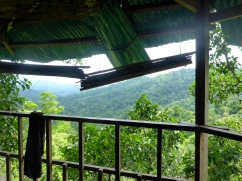 View from the Treehouse