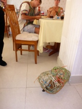 Moo's First Hotel Breakfast
