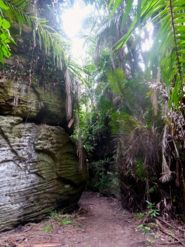 Dry Jungle Trail - Bako National Park