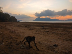 Monkeys at Sunset - Bako National Park