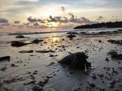 Hermit Crab at Pulao Tiga