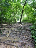 Path to the Volcano