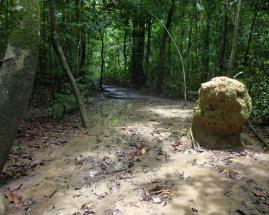 Path to the Mud Volcano