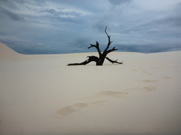 """Dune """"Vegetation"""""""