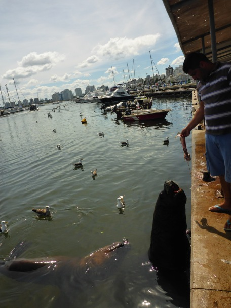 Feeding Sealions in the Harbour