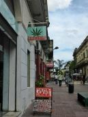 Weed. Everywhere. in Montevideo