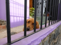 Dog That Wishes He Was Out Looking at Graffiti.