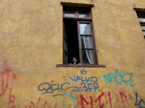 Dog. Graffiti.